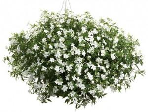 Truhlíkové květiny